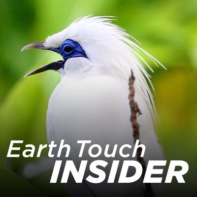 Earth Touch Insider (HD)