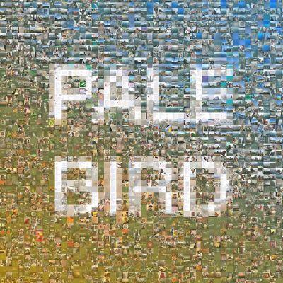 Year of The Bird