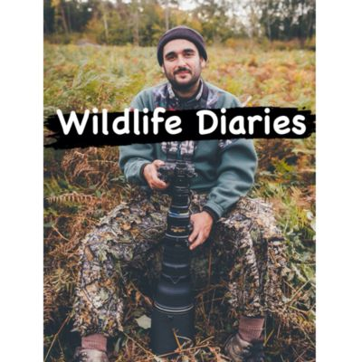 Wildlife Diaries