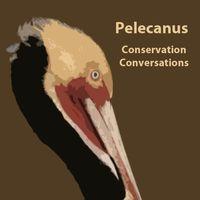 Pelecanus