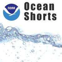 NOAA: Ocean Shorts