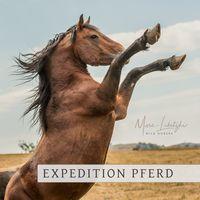 Expedition Pferd