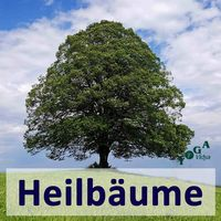 Baumheilkunde-Podcast: die mystische und heilende Seite von Bäumen