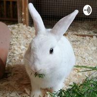 Kaninchenwissen